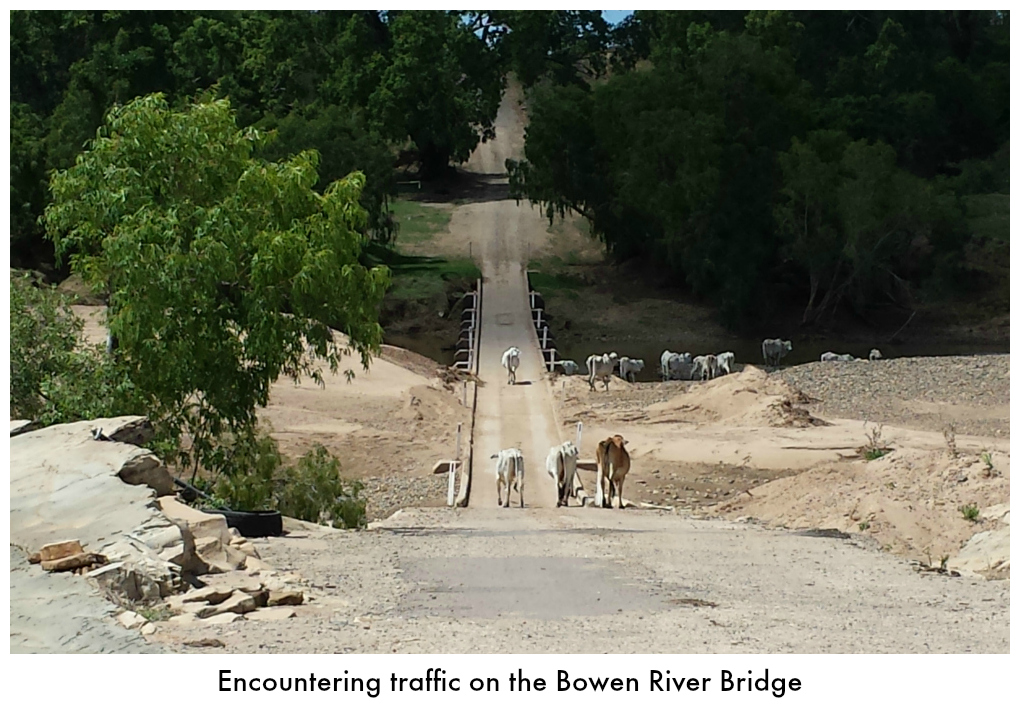 Cattle traffic on the Bowen River bridge