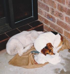 Ram Lamb and Mum's dog Millie