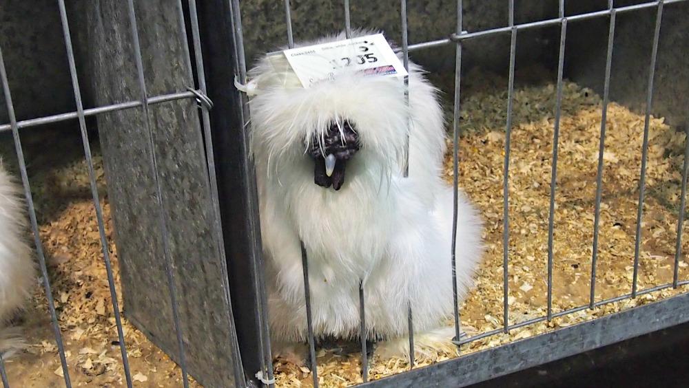 2015 Sydney Royal Easter Show - poultry pavilion