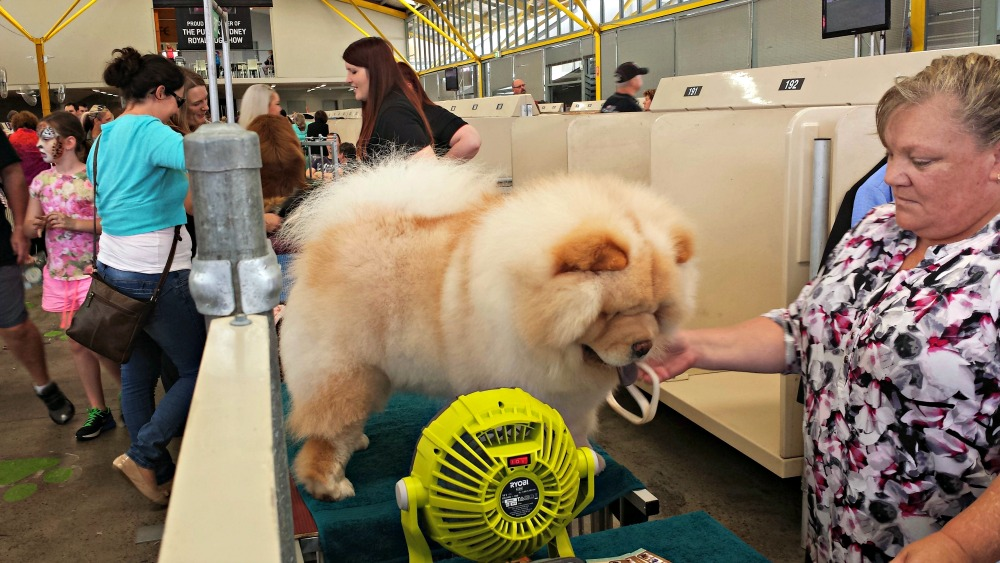 2015 Sydney Royal Easter Show - dogs