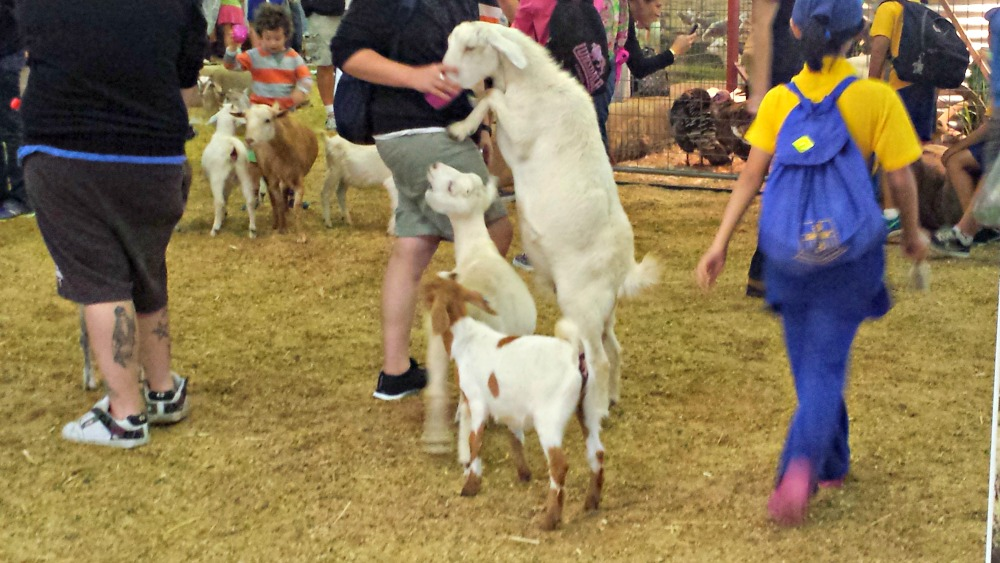 2015 Sydney Royal Easter Show - farm nursery