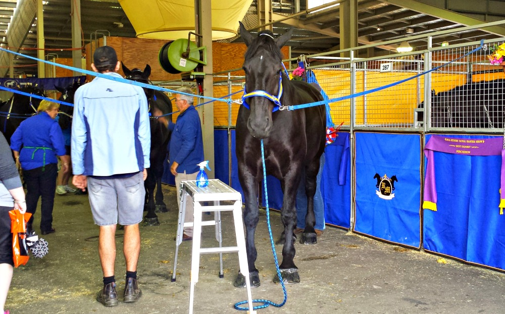 2015 Sydney Royal Easter Show - horses