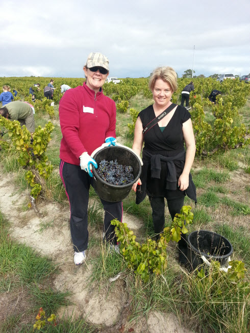 Picking grapes at Yangarra