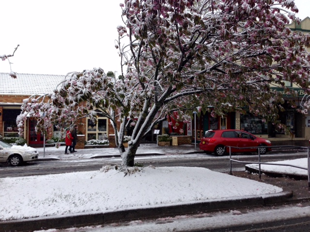 Snow at Leura
