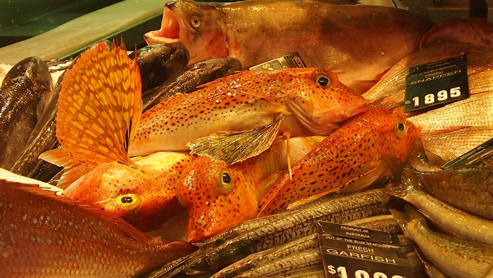 Gurnard at Queen Victoria Market