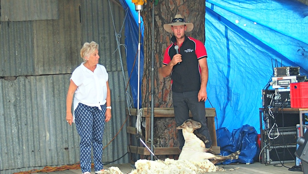 Shearing demonstration at Luddenham show