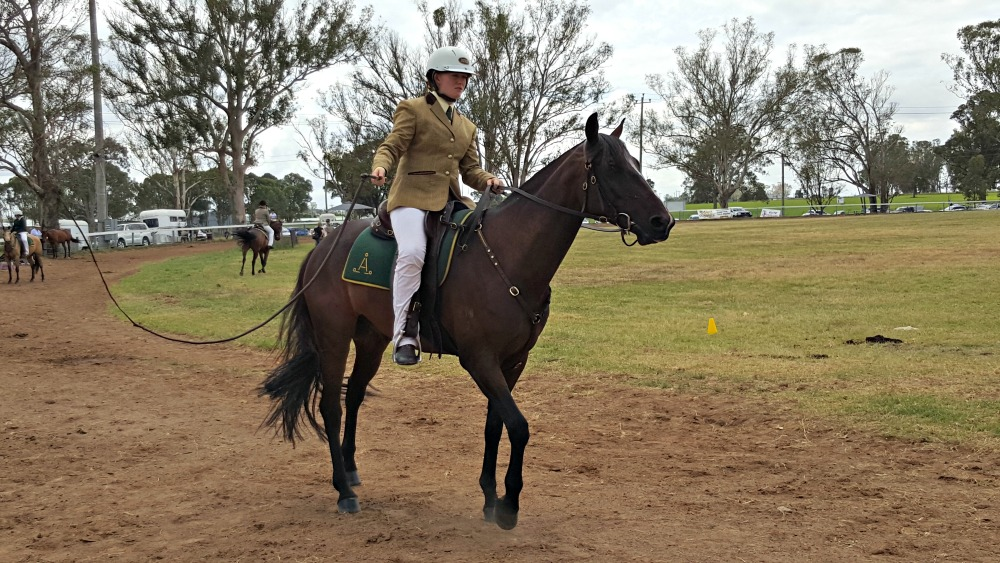 Australian Stock Horse classes at Luddenham Show