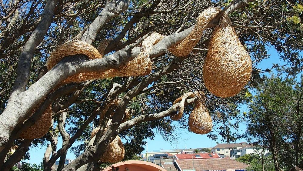 Nests by Jette Mellgren