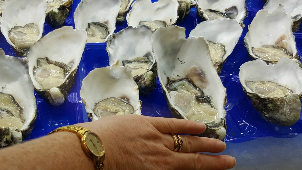 These Pacific oysters were the size of my hand.