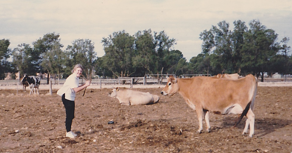 Me and the dairy cow I had to monitor throughout my first year at Roseworthy College.